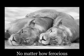 No matter how ferocious life becomes, find some quite time..
